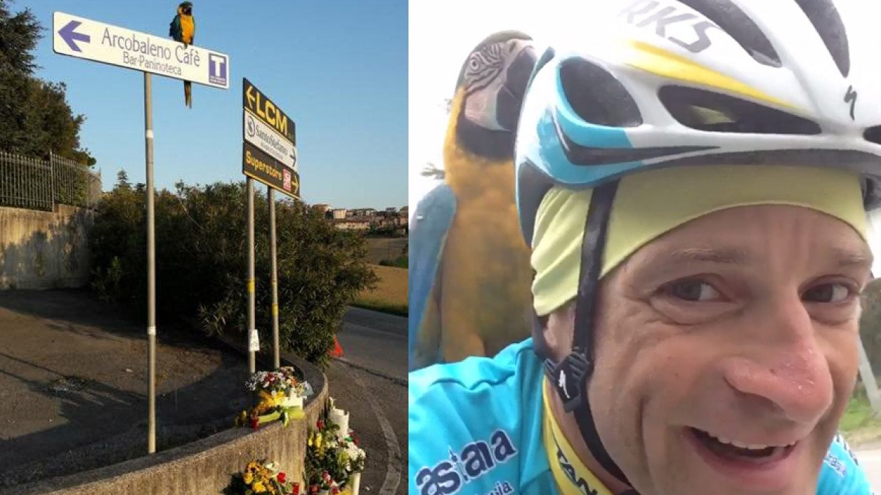 innovative design 49f04 d1ccc Michele Scarponi's training partner parrot returns to place ...